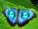 Inlay in butterfly with blue wings with text