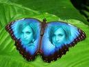 metin ile mavi kanatlı kelebek inlay