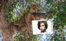 Frame with leopard