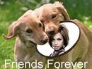 Dogs Frisbee Friends forever Scene