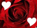 L'amour en Rouge