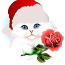 chat noel avec une rose 2 photos