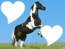 i love horse