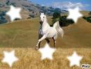 Un cheval reste le plus bel animal