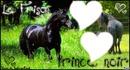 love chevaux