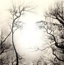 Les yeux dans l'arbre
