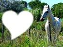 I love chevaux