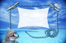 dauphin et mer