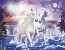 chevaux z'amoureux